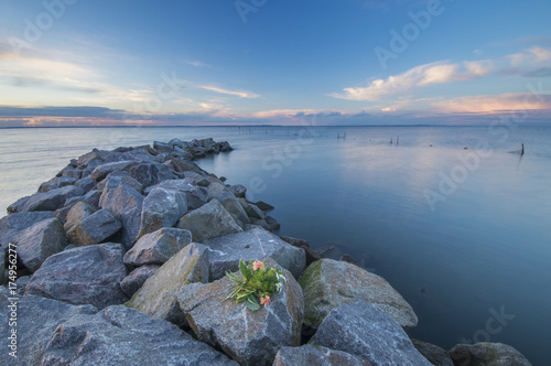 Canvas Print a bunch of flowers lying on the breakwater