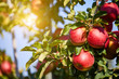 canvas print picture Apple Orchard