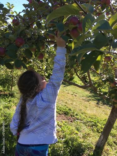 Plakat jabłko