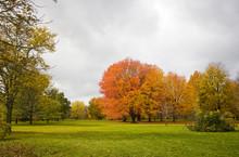 Colors Of Autumn Background. C...