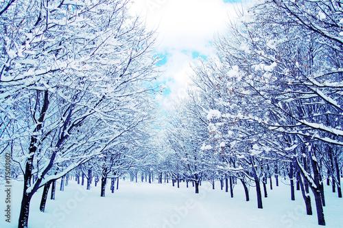 Foto auf AluDibond Licht blau 青い冬