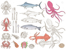 Seafood Collection. Vector Hand Drawn Illustration With Seafood. Sketch.