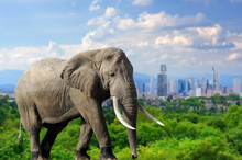 Elephant With The City Of On T...