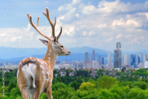 Valokuvatapetti Deer with the city of on the background