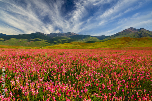 Foto op Canvas Baksteen Field with flowers in mountain valley. Summer landscape during sunset