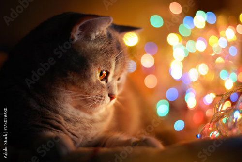 Keuken foto achterwand Kat Cat and Christmas lights