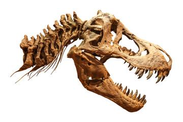Skeleton of Tyrannosaurus rex ( T-rex ) on isolated background . ( Skull and Neck )