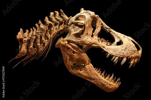 Skeleton of Tyrannosaurus rex ( T-rex ) on isolated background Canvas Print