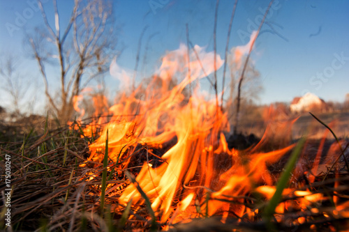 Foto  Forest or field fire