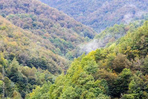 Valle y bosque. Parque Natural de Redes, Asturias, España.  © LFRabanedo