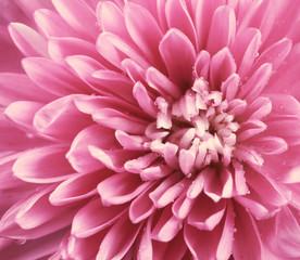 Цветок осенний яркий на нём роса