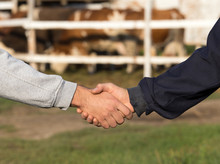 Farmers Shaking Hands In Front...