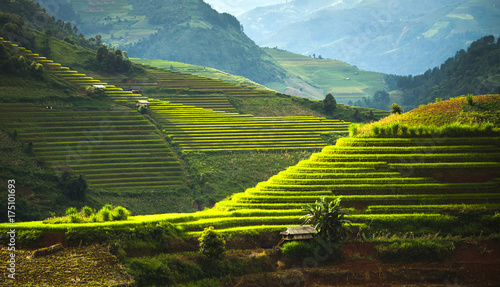 Aluminium Prints Rice fields World heritage Ifugao rice terraces