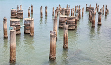 Abandoned Pilings From An Old Dock