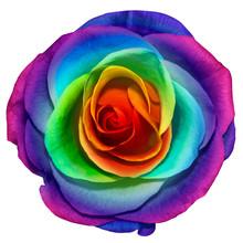 Photo Macro Flower Rose. Rainbow And Flower Petals