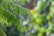 canvas print picture - Tropical rain in the forest