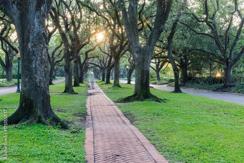 Romantic archway made from live oak trees, green grass and rustic brick path leads to infinity at sunrise. Beautiful scenery in Houston, Texas, USA. Green oaks tree tunnel. Urban tranquil background