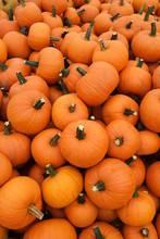 Orange Pumpkins In Pile