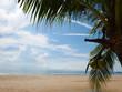 Beach and coconut