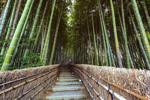 In de dag Bamboo Path to bamboo forest, Arashiyama,