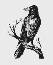 Black Raven On A Branch