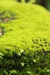 Green moss on rock floor with nature