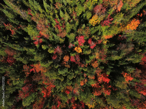 Poster Luchtfoto Aerial view of forest during fall