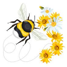 Bumblebee Closeup Head, Trace ...