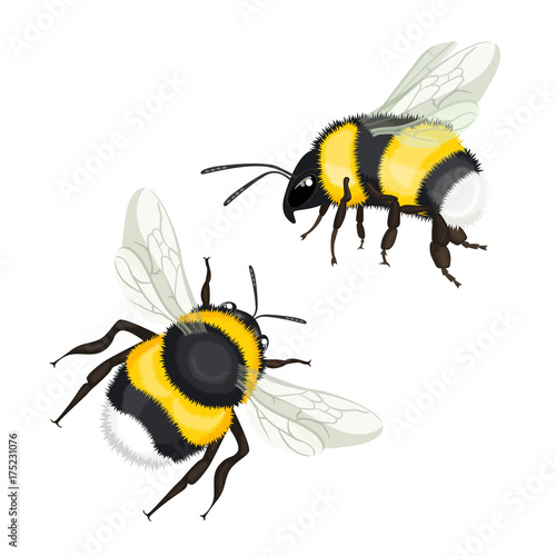 Fotografía Two bumble bees with wings flying vector illustration isolated