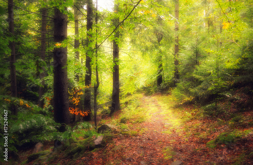 Fototapeten Wald A walk in the autumn woods. Golden autumn. The colorful trees. Wildlife of Ukraine