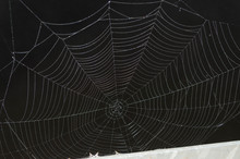 Black And White Spider Web Ove...