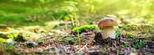 Porcini Mushroom In The Autumn Forest.
