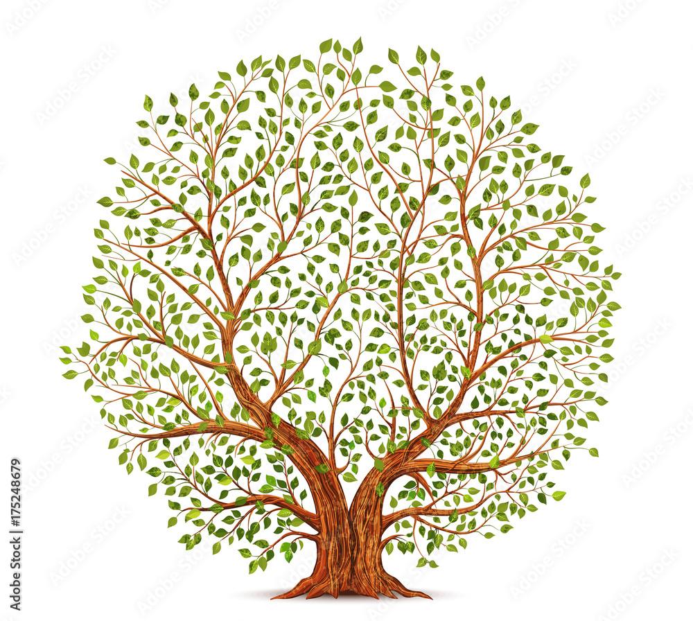 Stara ilustracja wektorowa drzewa <span>plik: #175248679 | autor: yayasya</span>