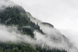 landscape of slope mountain with forest and pine tree with mist or thick fog - 175254672