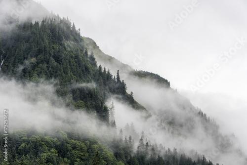 krajobraz-zbocza-gory-z-lasem-sosnowym-spowitym-gesta-mgla