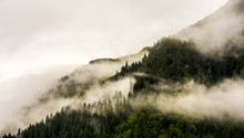 Fog On Mountain Top With Pine Tree