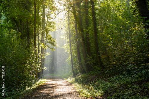 Garden Poster Road in forest Morning sunlight bursting through the foliage of the wood.