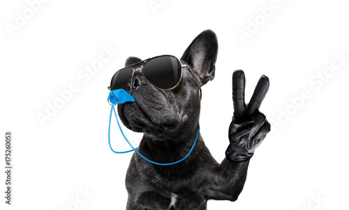 Aluminium Prints Crazy dog referee dog with whistle