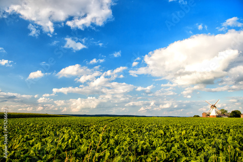 Plakat Krajobraz Holandii wiatrak