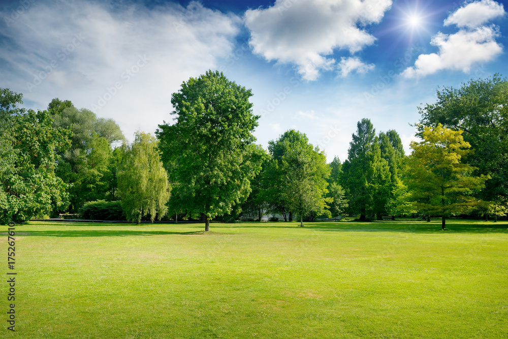 Fototapeta Bright summer sunny day in park with green fresh grass and trees.