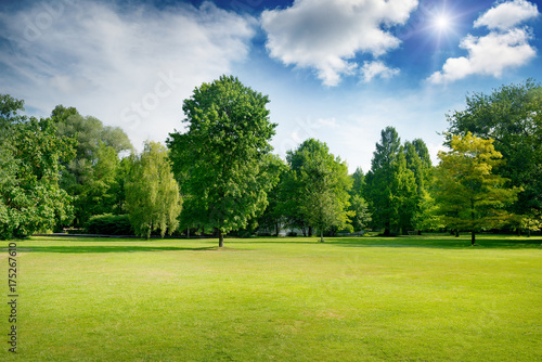Fototapeta Bright summer sunny day in park with green fresh grass and trees. obraz
