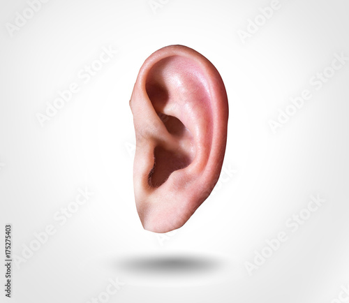human ear isolated on white background Wall mural