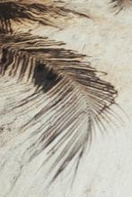 Shadow Of Palm Leaf On A Sandy Beach