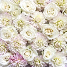 Frame-filled Pink And White Roses And Dahlia Flowers
