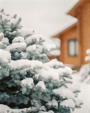 Fir Tree Near Wooden House