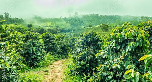 Stampa su Tela Coffee Plantation in Jerico / Colombia