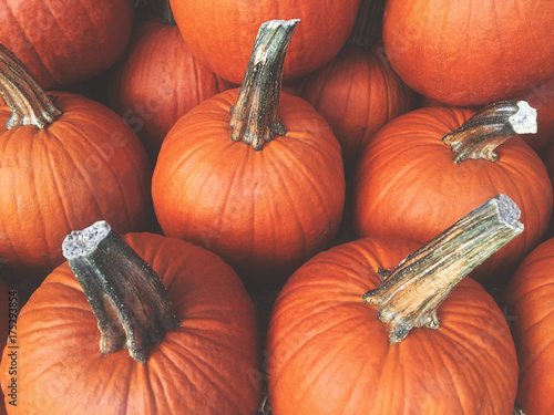 Fotografie, Obraz  Fall Pumpkins Background