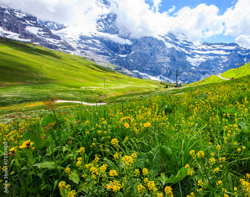 Foto  Beautiful summer landscape panoramic view of the yellow wildflower field with majestic colorful Swiss mountain ranges and beautiful blue sky as a background