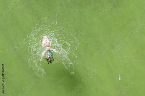 Plakat Spider Nest