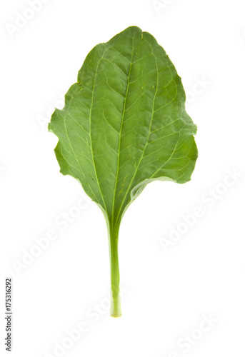 Fotografie, Tablou  Plantain leaves isolated on white background
